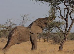 when it comes to pruning, try to keep elephants away