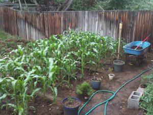 front yard farming
