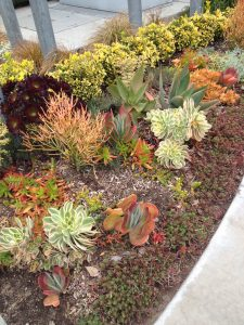 succulent perennial bed